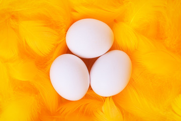 white eggs in feather nest