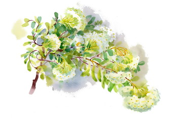 Watercolor spring branch on white background