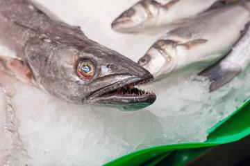 Display frozen fishes for sale at a market, La Boqueria Market