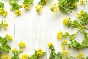 菜の花のフレーム 白木材背景 (菜の花の一種)