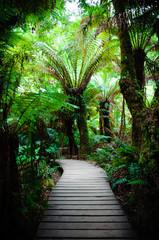 Maits Rest Rainforest Trail on Great Ocean Road, Australia