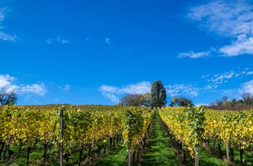 Ortenauer Wein