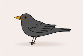 Blackbird vector illustration