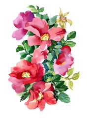 Colorful watercolor wildflowers illustration on white background
