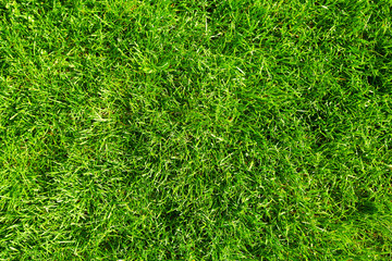 Photo sur Aluminium Herbe Green grass.