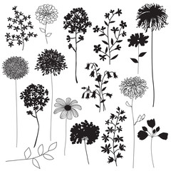 botanical silhouettes
