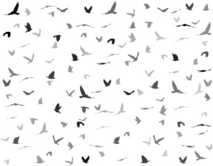 silhouettes of birds seamless pattern