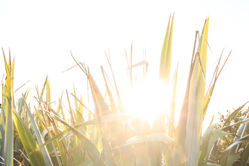 Tropical grass in the backlight