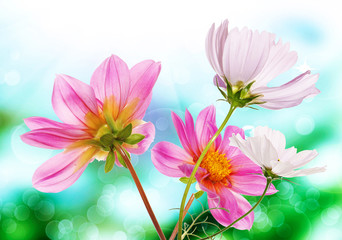 Beautiful  fresh pink garden flowers on abstract spring nature b