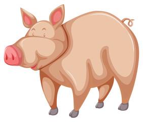 Pink pig