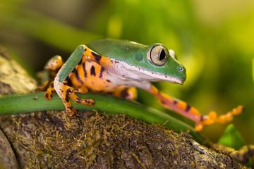 Frosch auf Ast im Dschungel