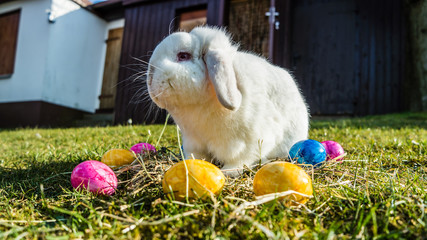 Osterhase mit bunten Eiern07
