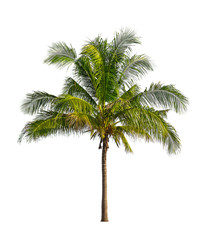 Coconut palm trees isolated on a white background