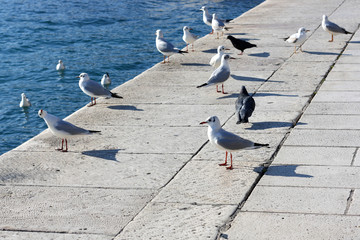 Group of seagulls and pigeons hanging near the sea.