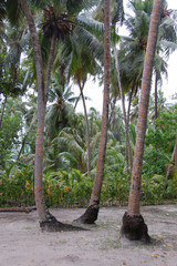 Palms at white sand beach