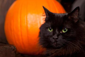 Black Cat by a Pumpkin
