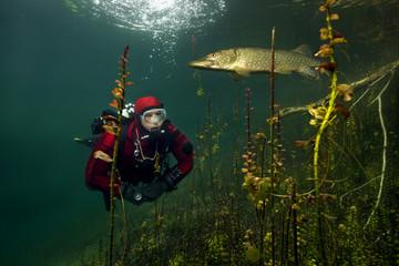 Diver and pike, in lake Echinger Weiher, Bavaria, Germany