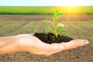 Plant in hand on sunny nature background