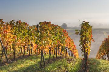 Deutschland, Bayern, Theilheimer Mainleite Nähe Waigolshausen, Ansicht des Weinbergs