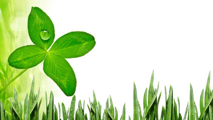 four leaf clover and grass background