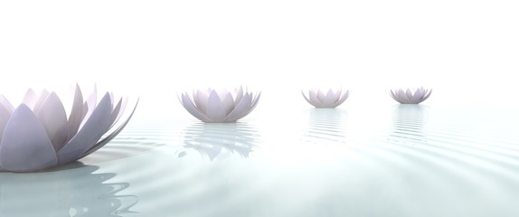 Wall Mural - Zen lotus flowers draw a path on the water