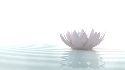 Wall Mural - Zen lotus on water