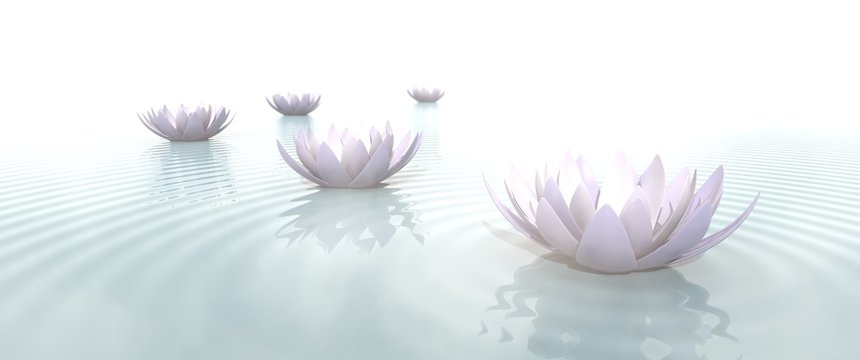 Zen Flowers on water in widescreen