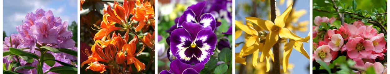 Obraz Spring banner colorful flowers - fototapety do salonu