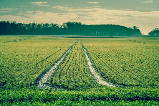 Tracks on a green field