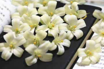 Common jasmine orange,Mock orange,Orange jasmine