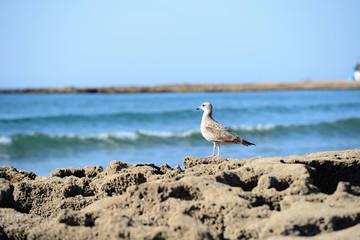 Beach with seagull
