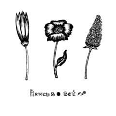 Flowers vector set
