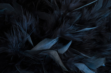 black feather Wall mural