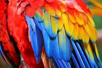 Macaw feathers Wall mural