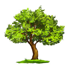 Tree vector illustration  hand drawn  painted
