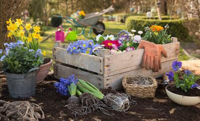 Frühlingsblumen: Blumen einpflanzen im Frühjahr