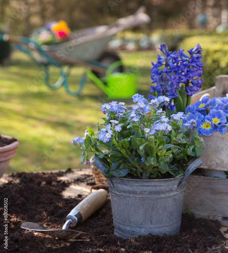 Frühjahr Ist Pflanzzeit ? Welche Blumen In Balkonkästen Pflanzen ... Fruhjahr Blumen Balkonkasten Pflanzen