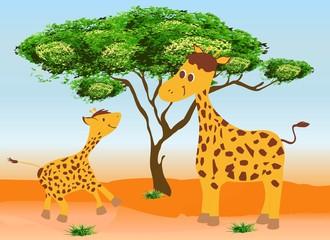 Dwie żyrafy,