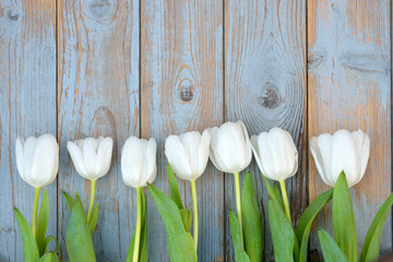 White tulips on a old wooden background with empty space layout