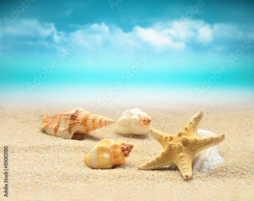 природа ракушка песок nature shell sand  № 1246851 загрузить