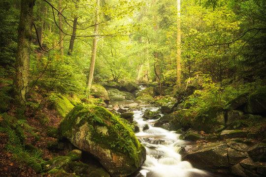 Grüne Oase - Ilsetal Harz - Wald