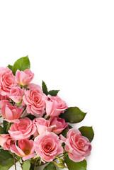 Petite Pink Roses