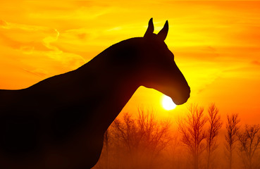 Silhouette of a horse on a background of orange sky at sunset