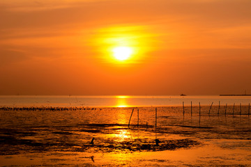 Beautiful sunset at the wetland seacoast