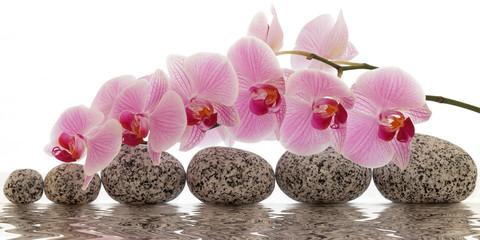 Orchidee mit Wasserspiegelung