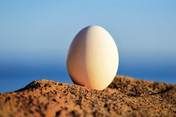Egg on the coast