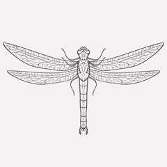 Vector illustration of dragonfly