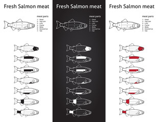 Fresh salmon meat diagram