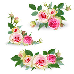 Set of pink roses.