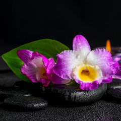 spa still life of purple orchid dendrobium, green leaf Calla lil